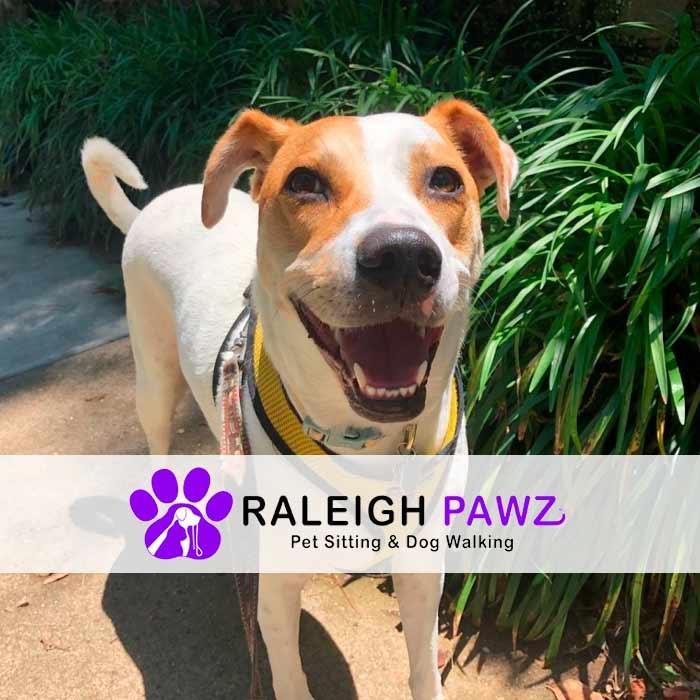 smiling dog on leash